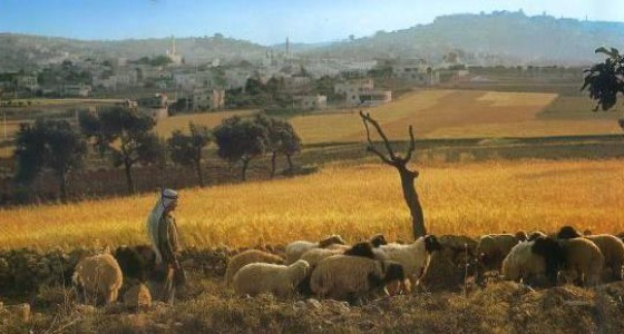 Israel Tours from South Africa - Bethlehem
