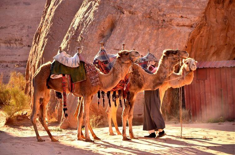 Wadi Rum jordan tours from South africa